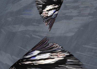 MA Birds 2013