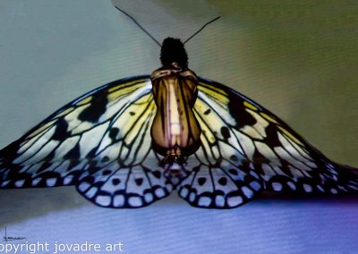 Butterfly, 22april 2018
